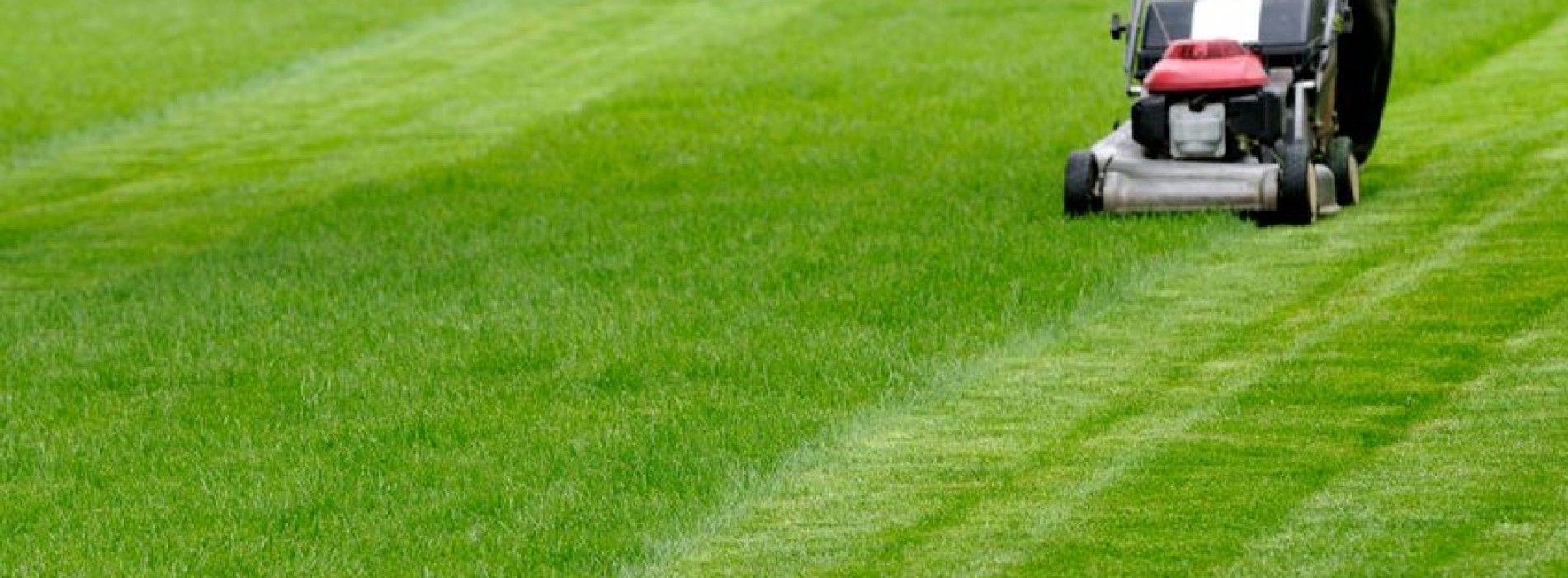 Jak sprawić by nasz trawnik wyglądał pięknie?