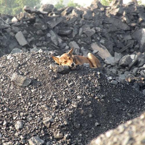 Wszystko, co powinieneś wiedzieć o rodzajach węgla kamiennego