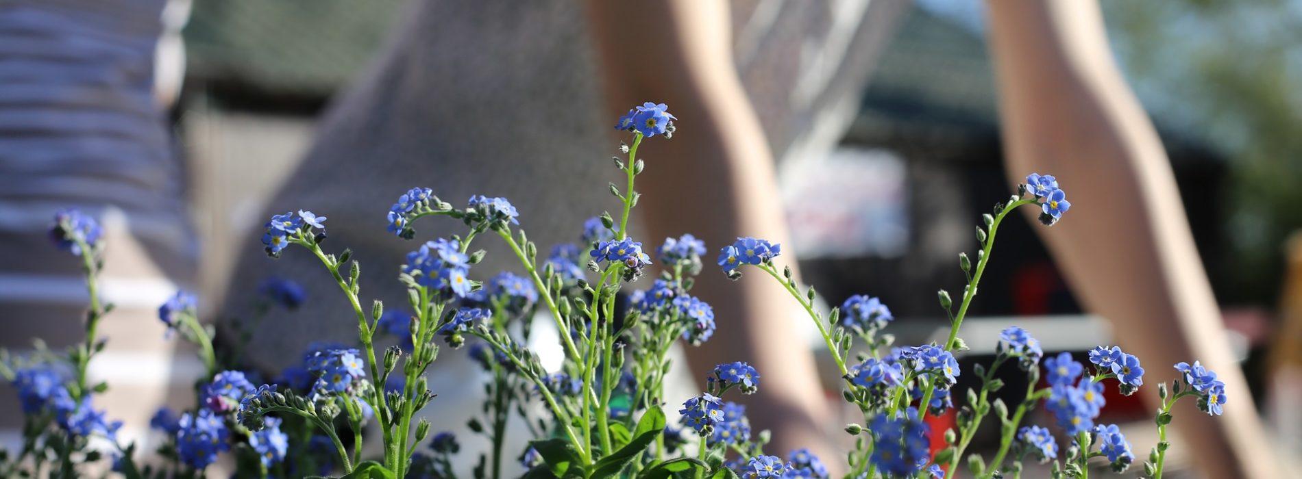 Rośliny, które warto mieć w swoim ogrodzie